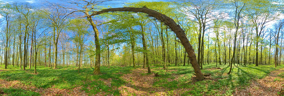 Fruehlingswald